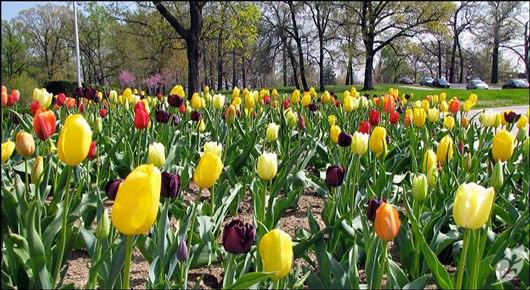 Best Senior Activities Near Glen Arm, Maryland- Rawlings Conservatory and Botanic Gardens 2