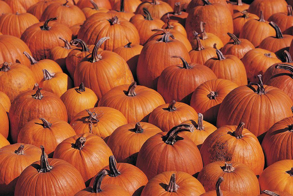Surprising Health Benefits of Pumpkins