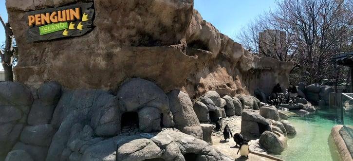 Fun Senior Activities in Philadelphia- Penguin Park- Adventure Aquarium