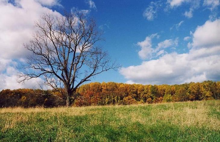 Best Senior Activities Near Glen Arm, Maryland- Cromwell Valley Park