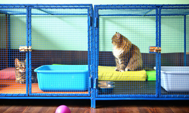 cats-waiting-to-be-adopted-at-a-shelter