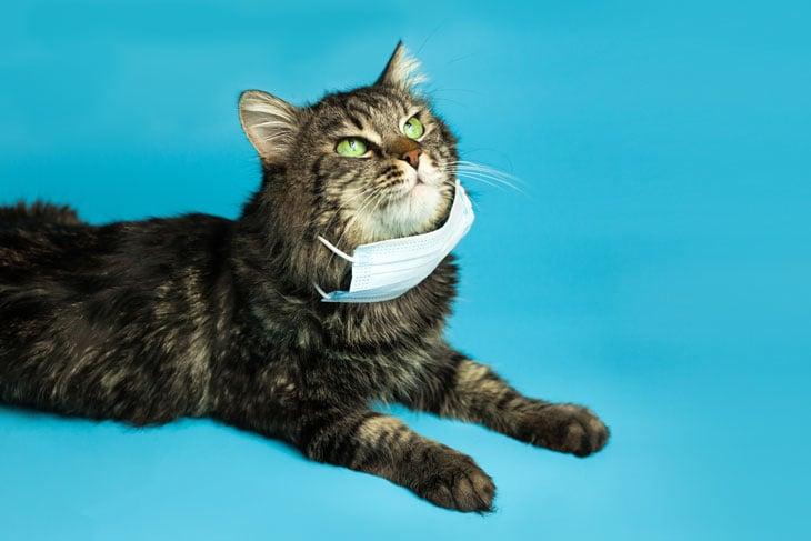 protect-pets-during-coronavirus