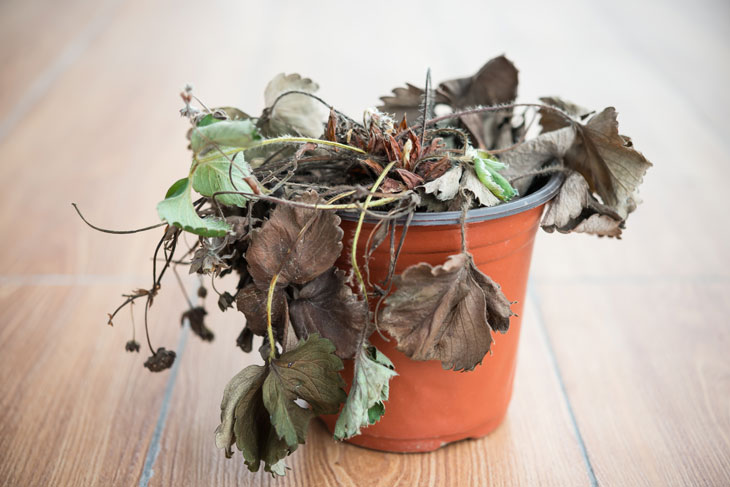 wilting-plant-time-for-personal-care