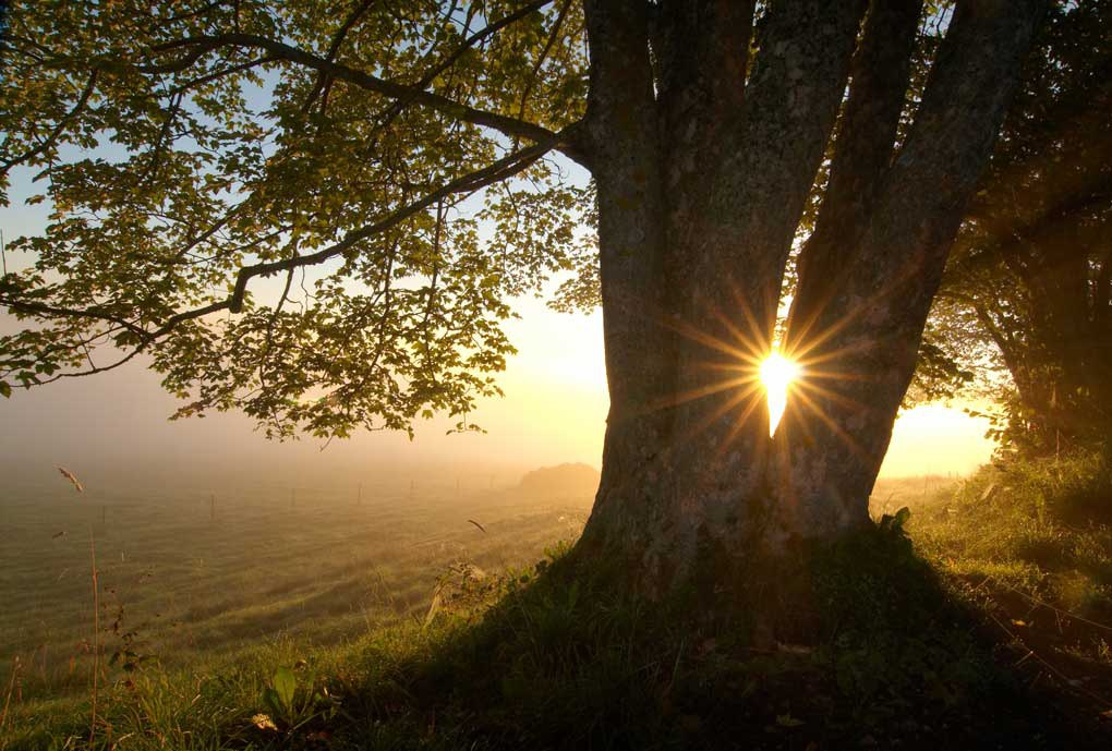Perfect Timing Sun Through Tree