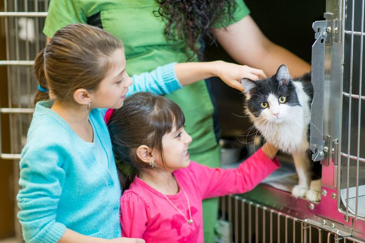 Children petting shelter cat