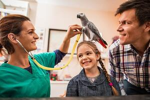 family's adopted parrot being examined by a vet