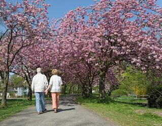 preparing your aging loved one for spring
