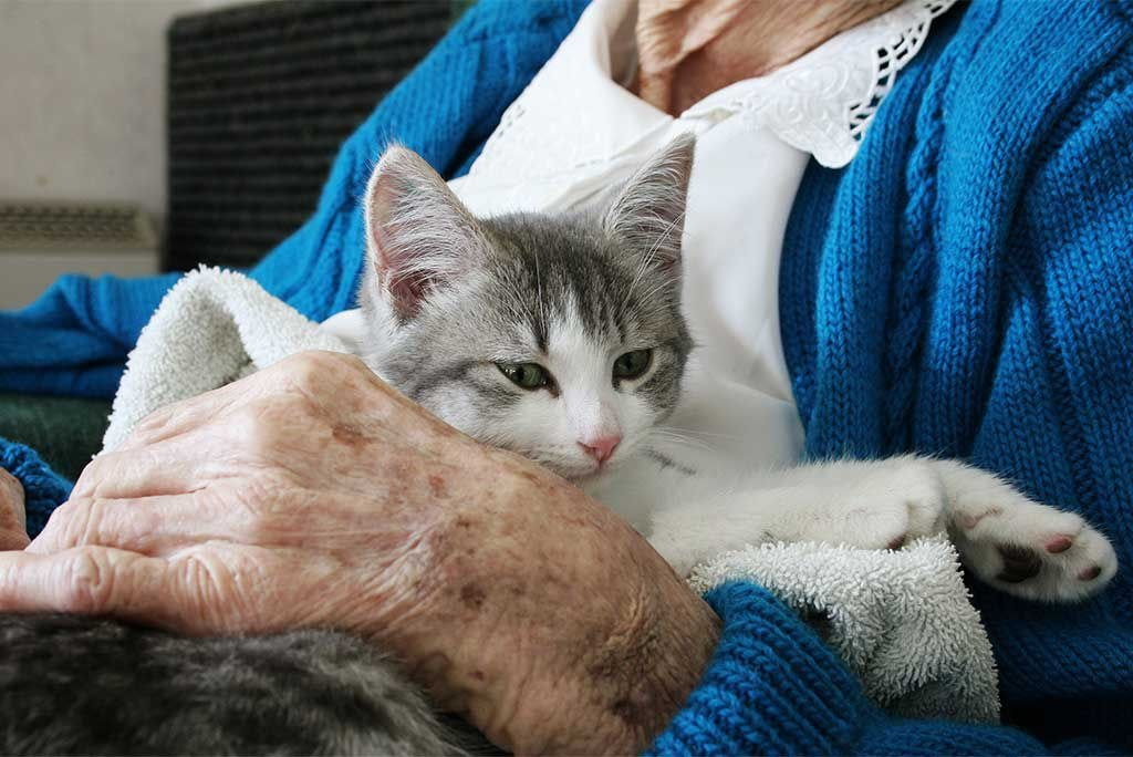 Why You Should Buy Grandma a Kitten: Health Benefits of Owning Pets